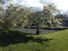 Landscapes-blossom.jpg