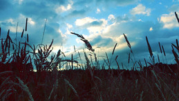 Landscapes-tall-grass.jpg
