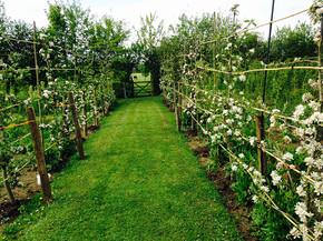 Gardens2-espalier-apples2.jpg