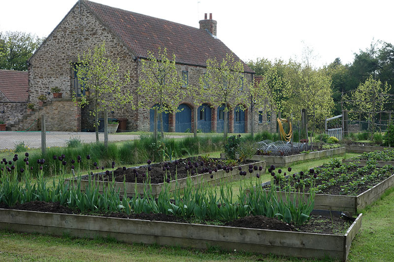 Gardens2-black-tulips-barn-in-background