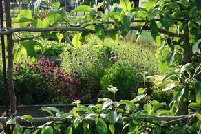 Gardens1-herb-garden-thru-appple-tree-wi