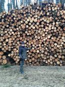 Hosts-firewood.jpg