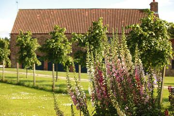 Gardens2-delphiniums-barn.jpg