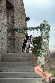Weddings-dog.jpg