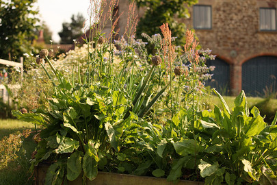 Gardens2-raised-bed-sorrel.jpg