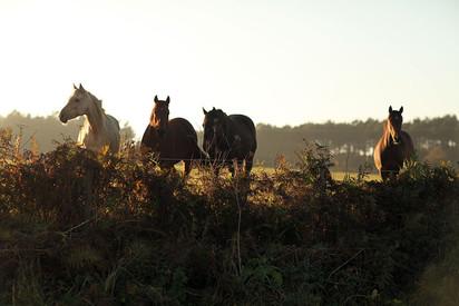 Landscapes-horses.jpg
