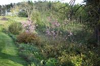 Gardens2-spring-flower-bank.jpg