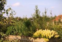 Gardens2-marjoram.jpg