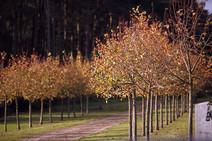 Landscapes-trees-drive2.jpg