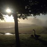 Exterior1-mist_wire-geese.jpg