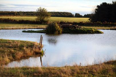 Landscapes-pond4.jpg