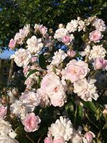 Gardens2-profusion-of-roses.jpg