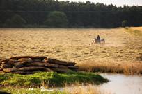 Landscapes-hay-tractor.jpg