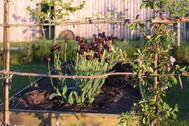 Gardens2-tulips.jpg