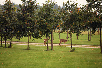 Landscapes-trees-deer.jpg