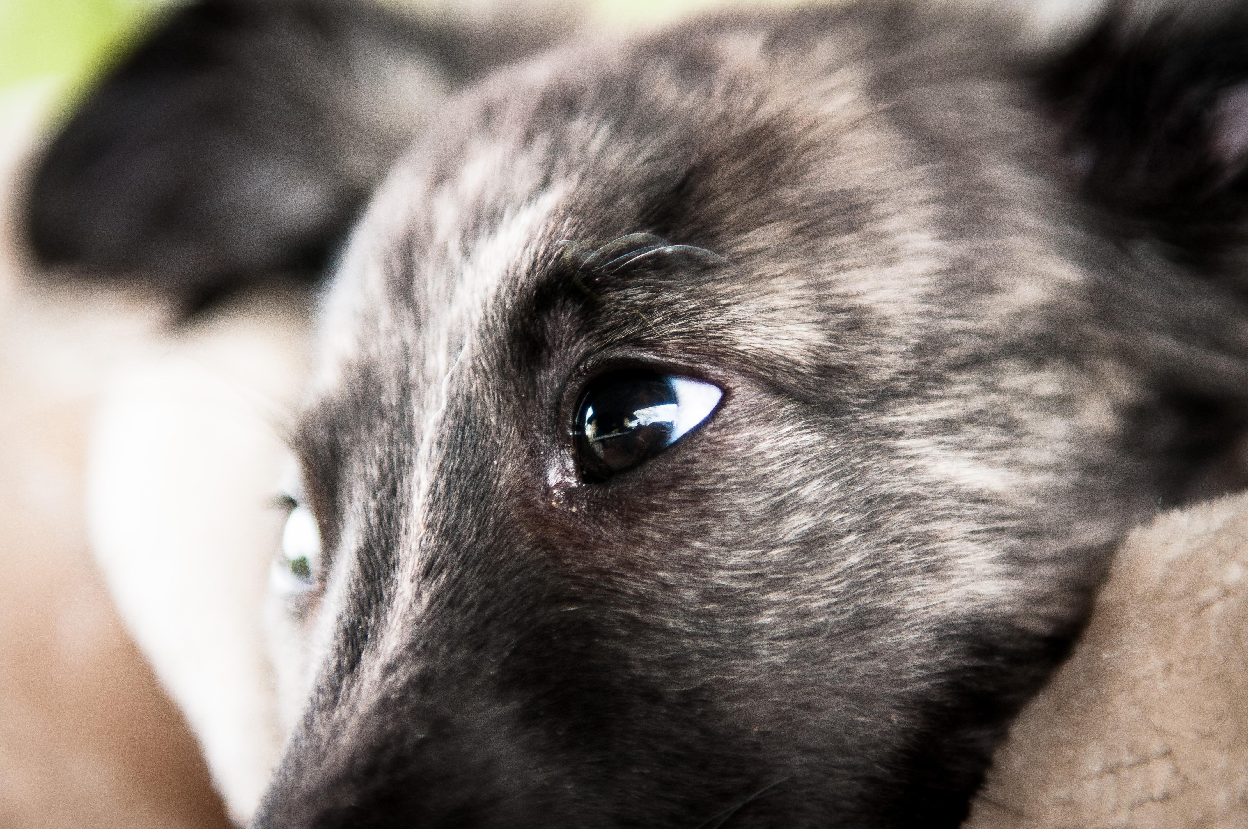 Natural Dogmanship Hundeschule