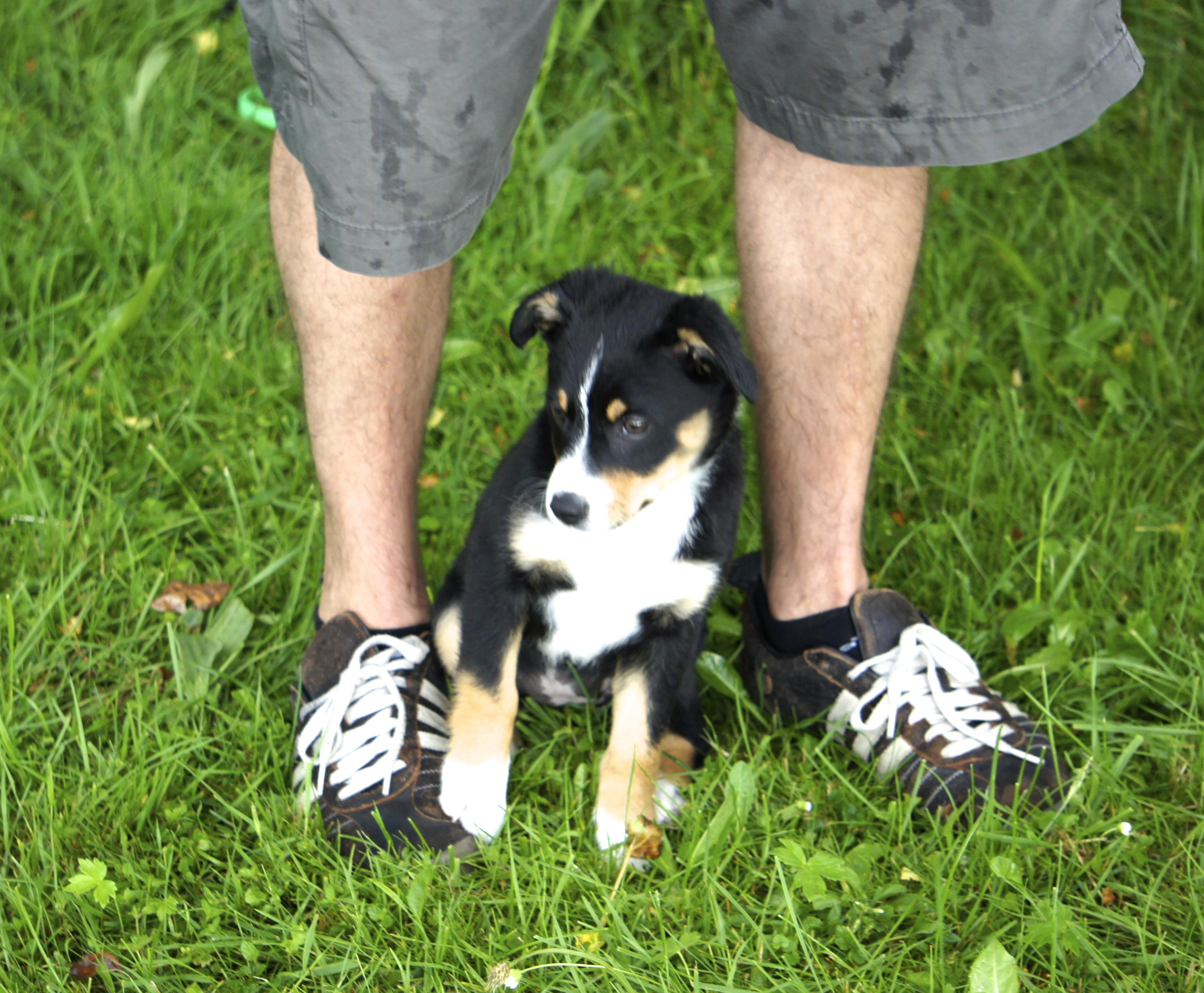 Hundeschule SLYDOG Welpengruppe