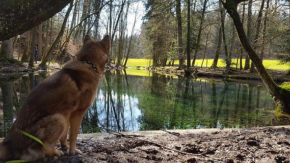 Hundeschule Slydog, Kynogogik
