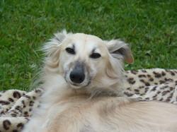 Natural Dogmanship, Hundeschule