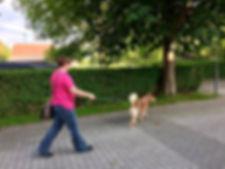 Hundeschule SLYDOG nature based mantrailing