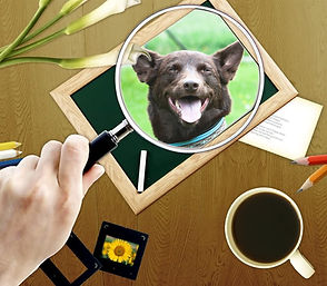 Natural Dogmanship® Ausbildung
