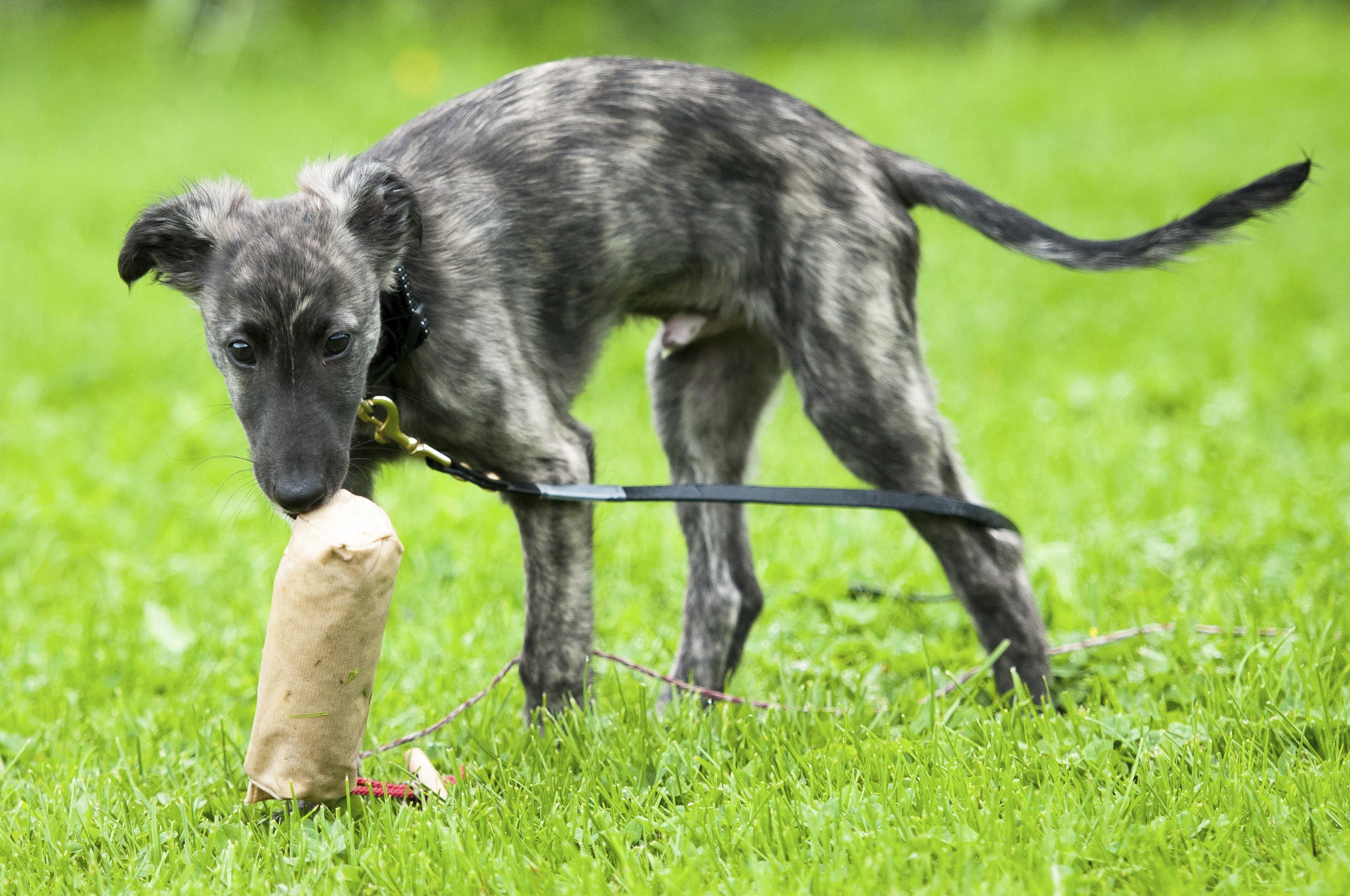 Natural Dogmanship® Hundeschule