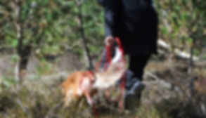 Hundeschule Zentralschweiz
