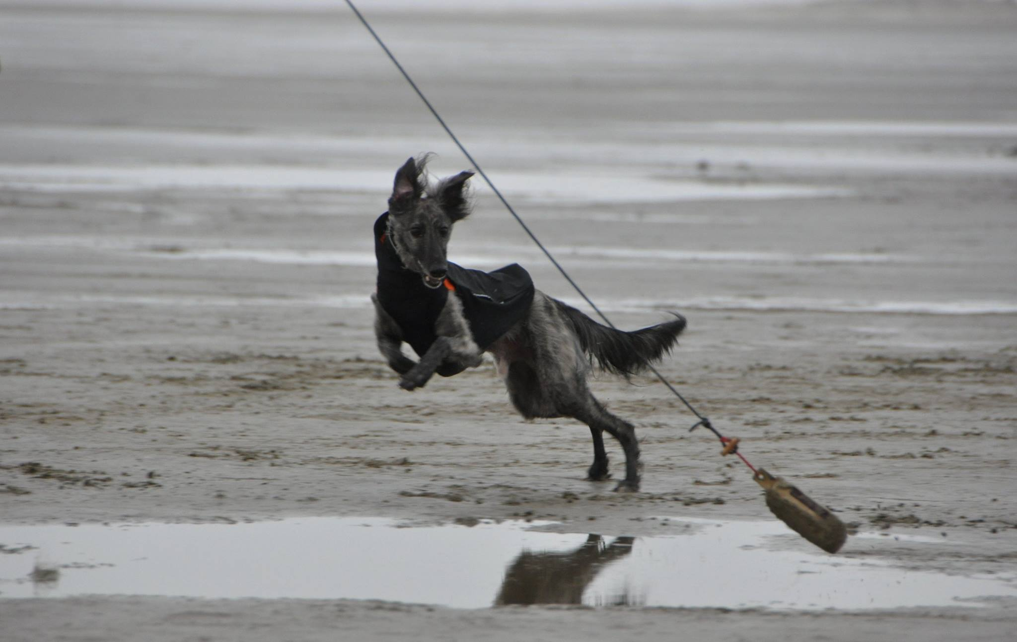 Natural Dogmanship