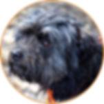 Slydog Natural Dogmanship®