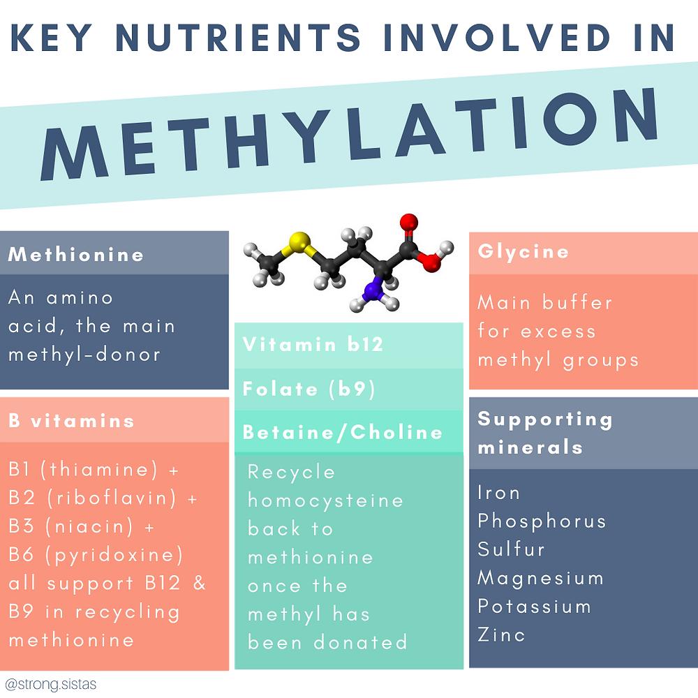 key nutrients involved in methylation