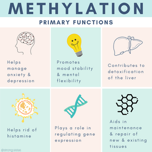primary functions involved in methylation