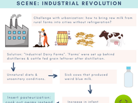 Origins of Pasteurization & the War Against Raw Milk