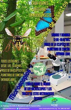 Insectos y Microscopios