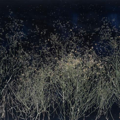 "Uproot | 40""x 60"" | resin, san felipe dyssodia, bird bones and centipede on panel | 2017"