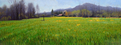 April Field with Yellow Flowers