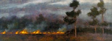 Pines, Field
