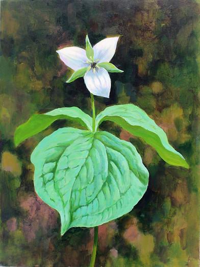 CSweet White Trillium