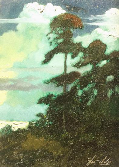 Pines, Twilight