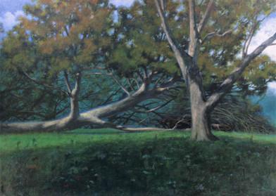 Hurricane, Trees, Open Sky