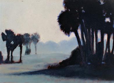 Palms, Sky