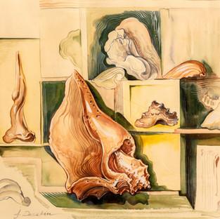 Conch Study