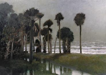 Palms, Fog
