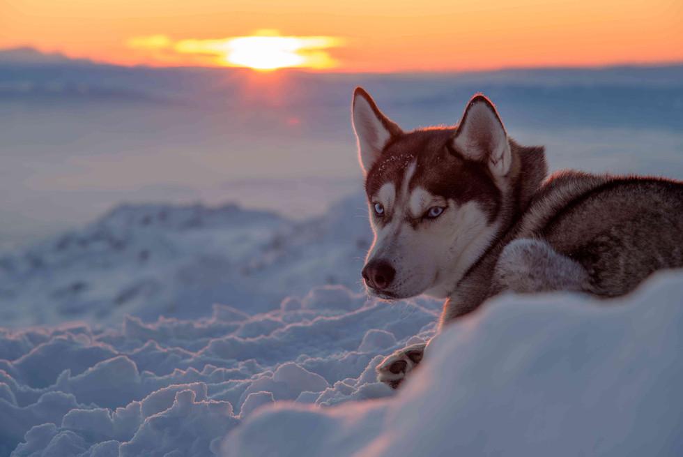 Dog on a mountain top.jpg