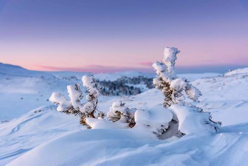 winter beauty.jpg