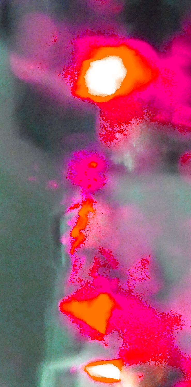 Fuchsia's Heart