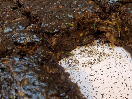 BEST Zucchini Brownies!
