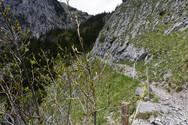 Wanderweg Boltigen - Alp Walop