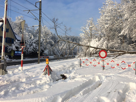 Technische Hilfeleistung, St. Gallerstrasse, Baum auf Gleis