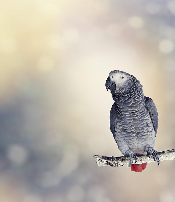 bird veterinarian