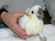 parrot vets near me